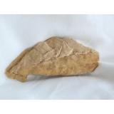 Třetihorní flóra - zkamenělé listy