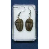 Naušnice z trilobita