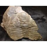 Hydrocephalus minor